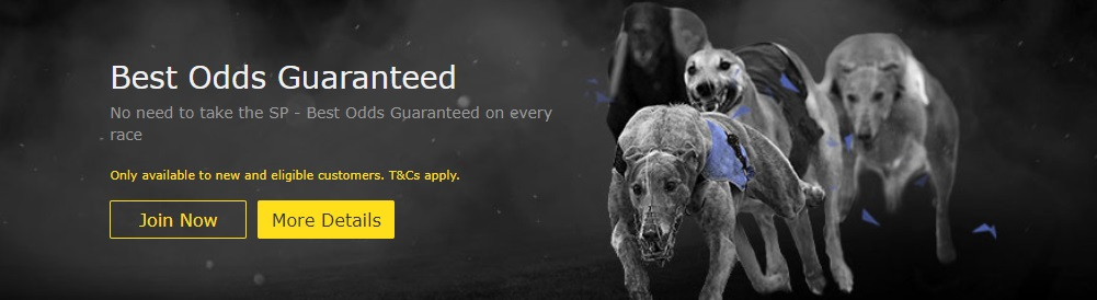 365 Bet Offer for Greyhound Racing